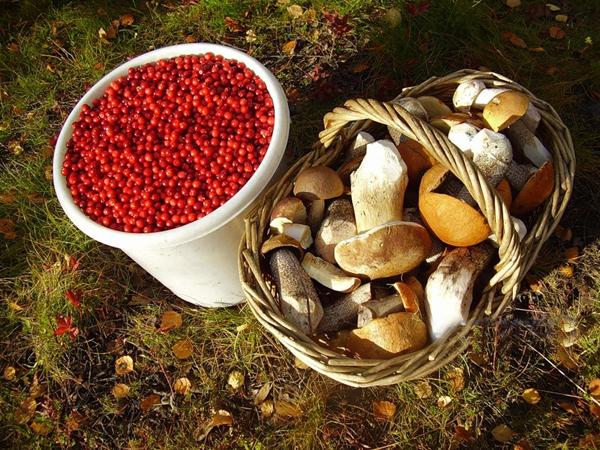 По вопросу сдачи ягод и грибов обращайтесь по тел. 8 (831) 433-54-30
